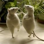 Танго мыши