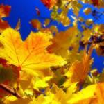 Осень_2