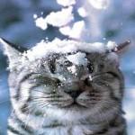 Кот_зима