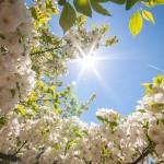 Весна_2